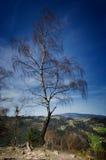 Alleen boom op de bovenkant van de berg Royalty-vrije Stock Foto