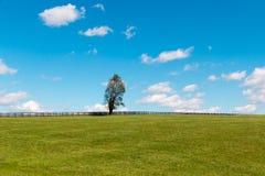Alleen boom op groene weilanden van paardlandbouwbedrijven Het landschap van het land stock foto