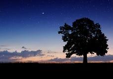 Alleen boom op het gebied Royalty-vrije Stock Fotografie