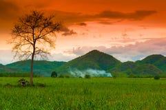 Alleen boom op het groene gebied. Royalty-vrije Stock Foto