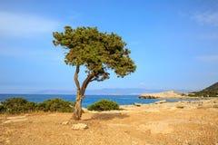 Alleen boom op overzeese achtergrond stock foto's