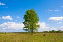 Alleen boom in steppe stock afbeelding