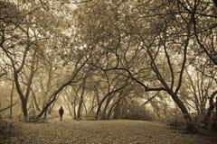 Alleen in bos. Stock Afbeelding