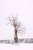 Alleen de winterboom stock foto