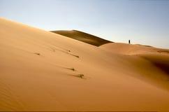 Alleen in de woestijn royalty-vrije stock afbeeldingen