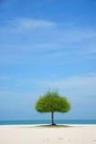 Alleen groene boom op strand Stock Afbeeldingen