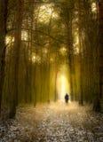 Alleen in het donkere bos Stock Afbeeldingen