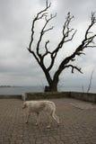 Alleen op de kust Royalty-vrije Stock Foto's