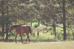 Alleen paard die in park lopen stock foto