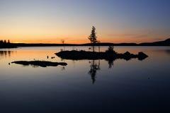 Alleen pijnboom op eiland Stock Afbeelding