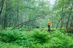 Alleen toerist in weelderig norvegian bos Royalty-vrije Stock Foto