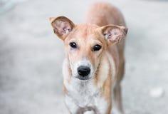 Alleen Verdwaalde hond op straat royalty-vrije stock afbeelding