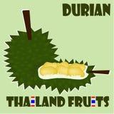 Allegagione: Durian dalla Tailandia Immagini Stock Libere da Diritti