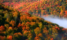 Allegheny forest Royalty Free Stock Photos