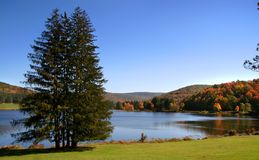 Allegheny Forest Royalty Free Stock Images