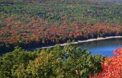 Allegheny national park Stock Images