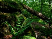 allegheny skognational royaltyfri bild