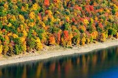 allegheny skognational royaltyfria bilder