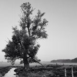 Allein Baum Stockfoto