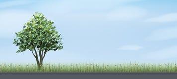 Allein Baum und Straße im grünen Feldbereich mit blauem Himmel und Wolken Lizenzfreie Stockbilder