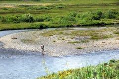 Allein durch The Creek Stockbild