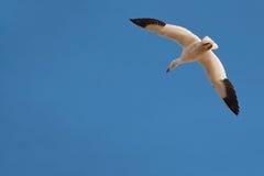 Allein fliegen Stockfoto