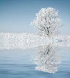 Allein gefrorener Baum. Stockfotografie