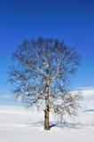 Allein gefrorener Baum auf dem Gebiet Lizenzfreie Stockbilder