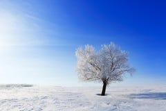 Allein gefrorener Baum auf dem Gebiet und blauer Himmel mit Wolken Stockbilder
