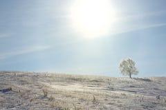 Allein gefrorener Baum auf dem schneebedeckten Gebiet des Winters Lizenzfreie Stockbilder