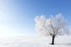 Allein gefrorener Baum auf dem schneebedeckten Gebiet des Winters Stockfotografie