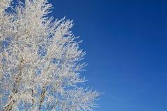 Allein gefrorener Baum auf dem schneebedeckten Gebiet und blauem Himmel Lizenzfreie Stockbilder