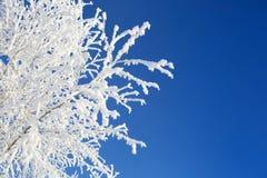 Allein gefrorener Baum auf dem schneebedeckten Gebiet und blauem Himmel Lizenzfreie Stockfotos