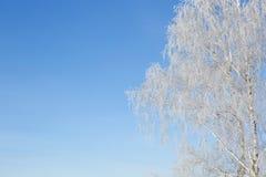 Allein gefrorener Baum auf dem schneebedeckten Gebiet und blauem Himmel Stockbild