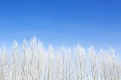 Allein gefrorener Baum auf dem schneebedeckten Gebiet und blauem Himmel Lizenzfreies Stockfoto