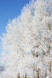 Allein gefrorener Baum auf dem schneebedeckten Gebiet und blauem Himmel Stockfotos