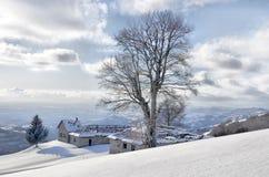 Allein gefrorener Baum auf die Gebirgsoberseite lizenzfreie stockfotos