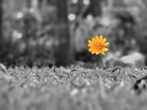allein gelbe Blume Lizenzfreies Stockfoto