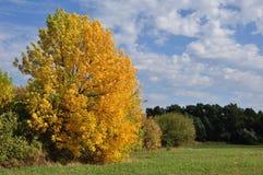 Allein gelber Herbstbaum im sonnigen Wetter mit Wolken lizenzfreie stockfotografie
