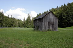 Allein im Wald Lizenzfreies Stockfoto