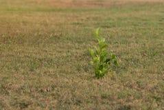 Allein junger grüner Pflanzenbestand allein Lizenzfreies Stockbild