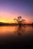 Allein lebendiger Baum ist in der Flut von See bei Sonnenaufgang Stockbilder