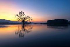 Allein lebendiger Baum ist in der Flut von See bei Sonnenaufgang Stockfotos