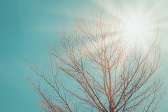 Allein oder einsamer getrockneter Baum und Niederlassungen im Tageslicht des Sommers saisonal stockfotografie