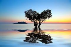 allein toter Baum in Form des Herzens und teilweise herein versenkt lizenzfreies stockfoto