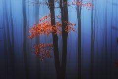 Allein unter dem Nebel Lizenzfreies Stockfoto