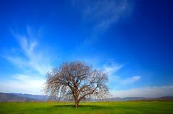 Allein Zeit des Baums im Frühjahr Lizenzfreie Stockfotografie