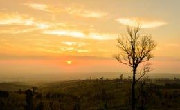 Alleinbaum auf Berg bei Sonnenaufgang Lizenzfreie Stockbilder