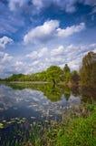 Alleinbaum auf dem Rand von schönem See Stockbild