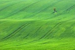 Alleinbaum auf den Grüngebieten in der Tschechischen Republik Lizenzfreie Stockbilder